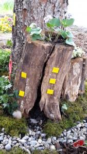 Kültéri tündérkert: ültetés farönkbe